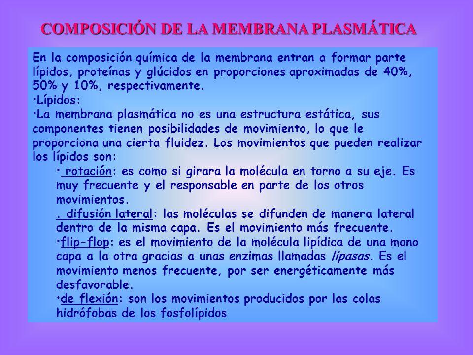 COMPOSICIÓN DE LA MEMBRANA PLASMÁTICA En la composición química de la membrana entran a formar parte lípidos, proteínas y glúcidos en proporciones apr