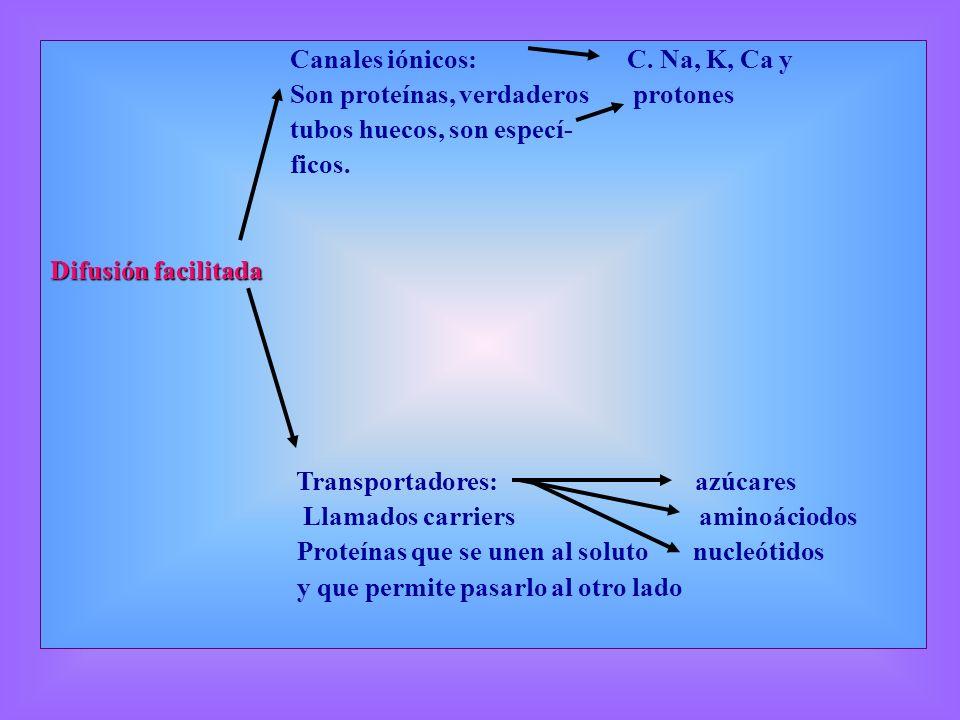 Canales iónicos: C. Na, K, Ca y Son proteínas, verdaderos protones tubos huecos, son especí- ficos. Difusión facilitada Transportadores: azúcares Llam