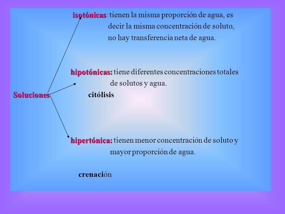isotónicas isotónicas: tienen la misma proporción de agua, es decir la misma concentración de soluto, no hay transferencia neta de agua. hipotónicas: