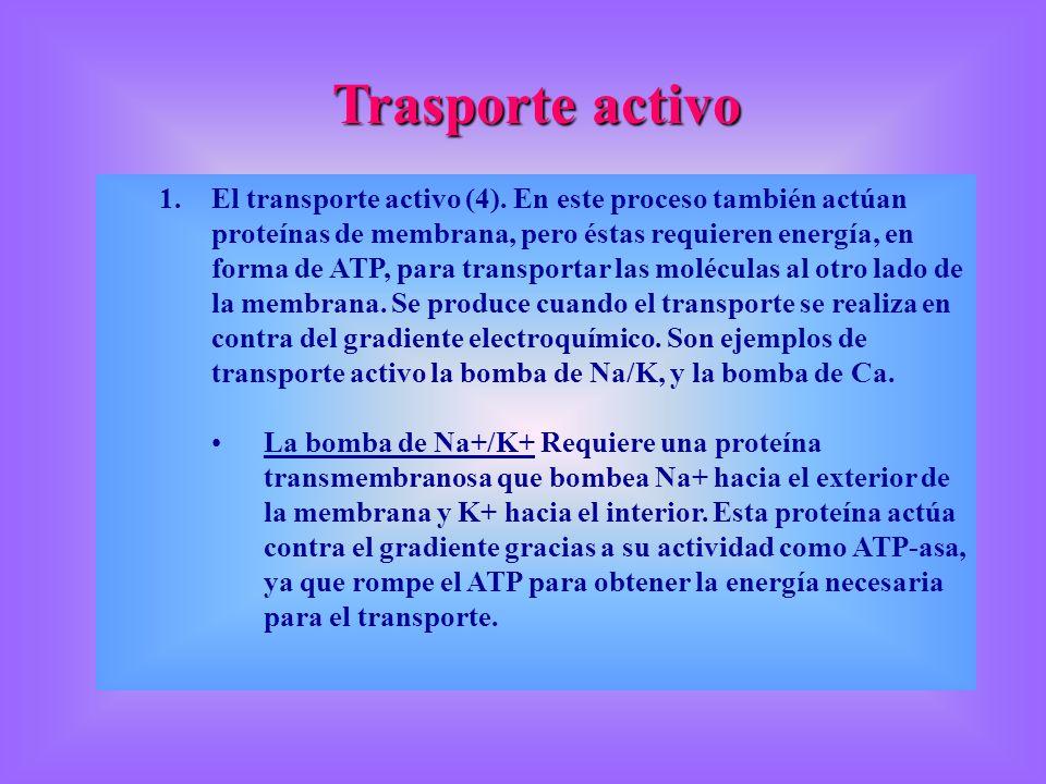 Trasporte activo 1.El transporte activo (4). En este proceso también actúan proteínas de membrana, pero éstas requieren energía, en forma de ATP, para