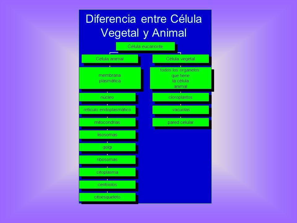 Diferencia entre Célula Vegetal y Animal