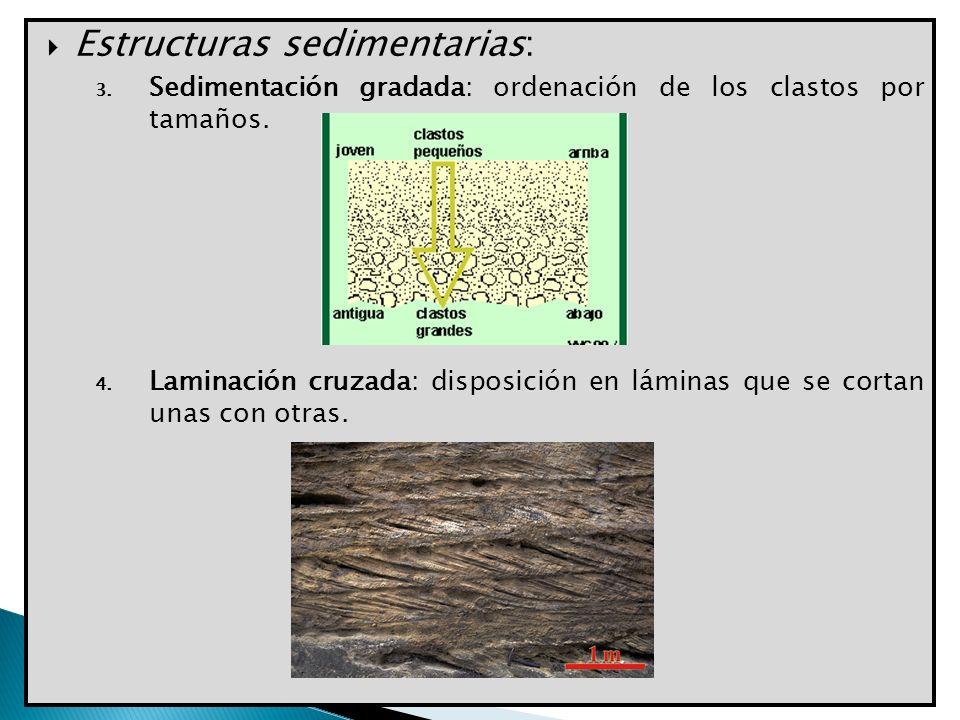 Estructuras sedimentarias: 3. Sedimentación gradada: ordenación de los clastos por tamaños. 4. Laminación cruzada: disposición en láminas que se corta