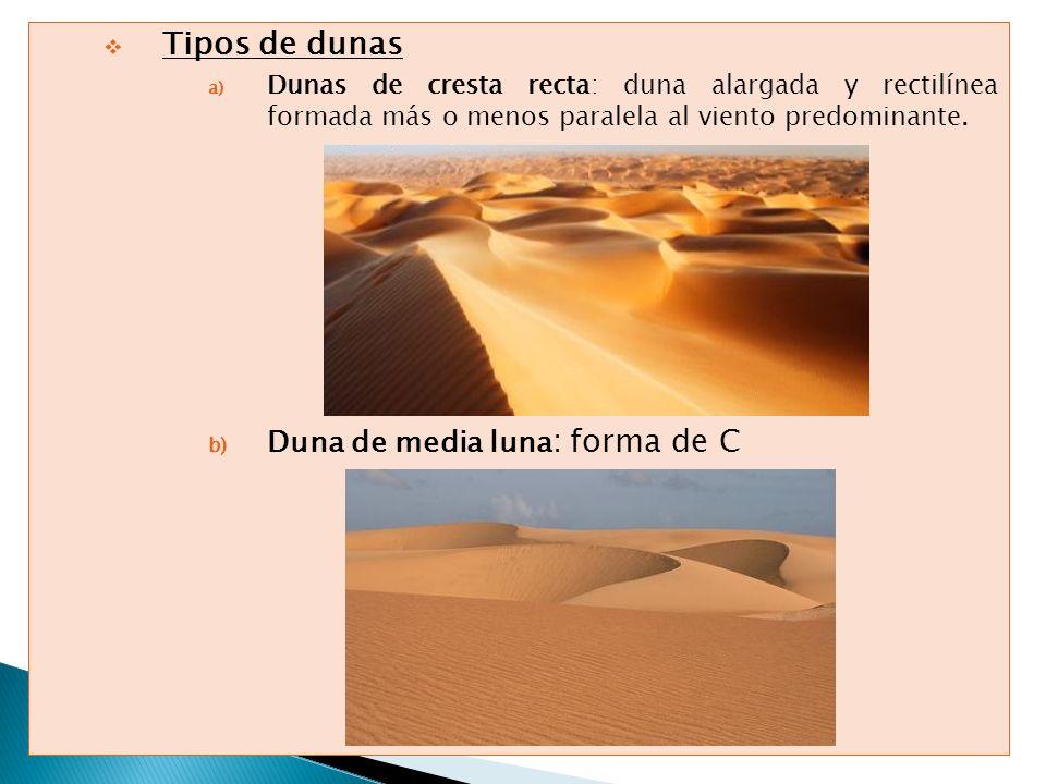 Tipos de dunas a) Dunas de cresta recta: duna alargada y rectilínea formada más o menos paralela al viento predominante. b) Duna de media luna : forma