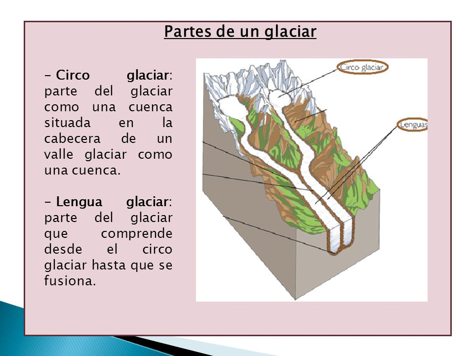 Partes de un glaciar - Circo glaciar: parte del glaciar como una cuenca situada en la cabecera de un valle glaciar como una cuenca. - Lengua glaciar: