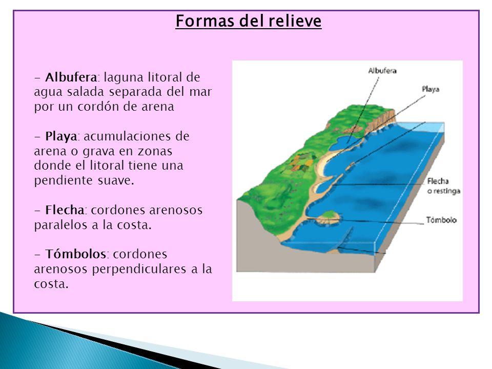 Formas del relieve - Albufera: laguna litoral de agua salada separada del mar por un cordón de arena - Playa: acumulaciones de arena o grava en zonas