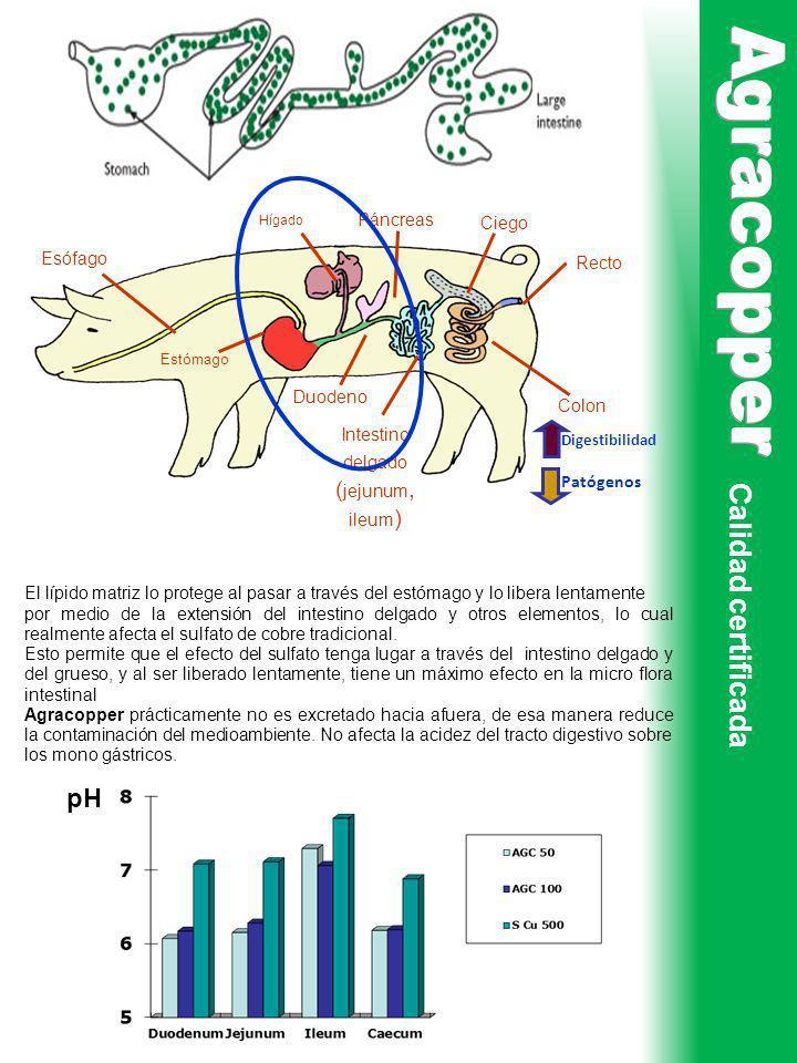Calidad certificada El lípido matriz lo protege al pasar a través del estómago y lo libera lentamente por medio de la extensión del intestino delgado