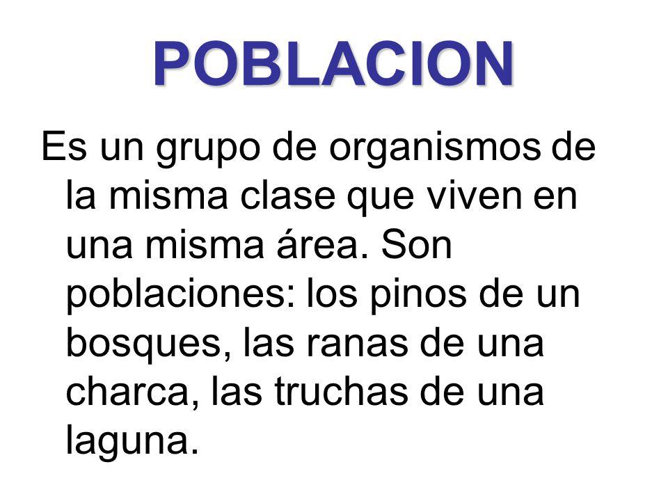 POBLACION Es un grupo de organismos de la misma clase que viven en una misma área. Son poblaciones: los pinos de un bosques, las ranas de una charca,