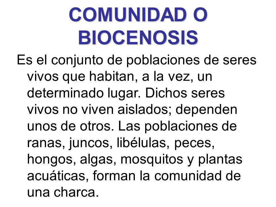 COMUNIDAD O BIOCENOSIS Es el conjunto de poblaciones de seres vivos que habitan, a la vez, un determinado lugar. Dichos seres vivos no viven aislados;