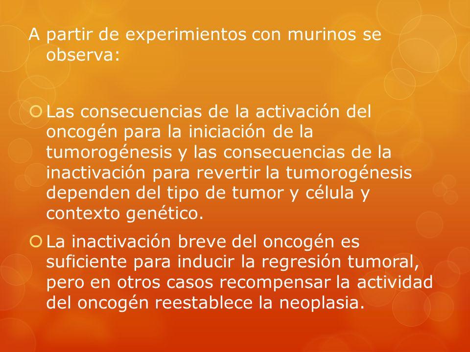 A partir de experimientos con murinos se observa: Las consecuencias de la activación del oncogén para la iniciación de la tumorogénesis y las consecue