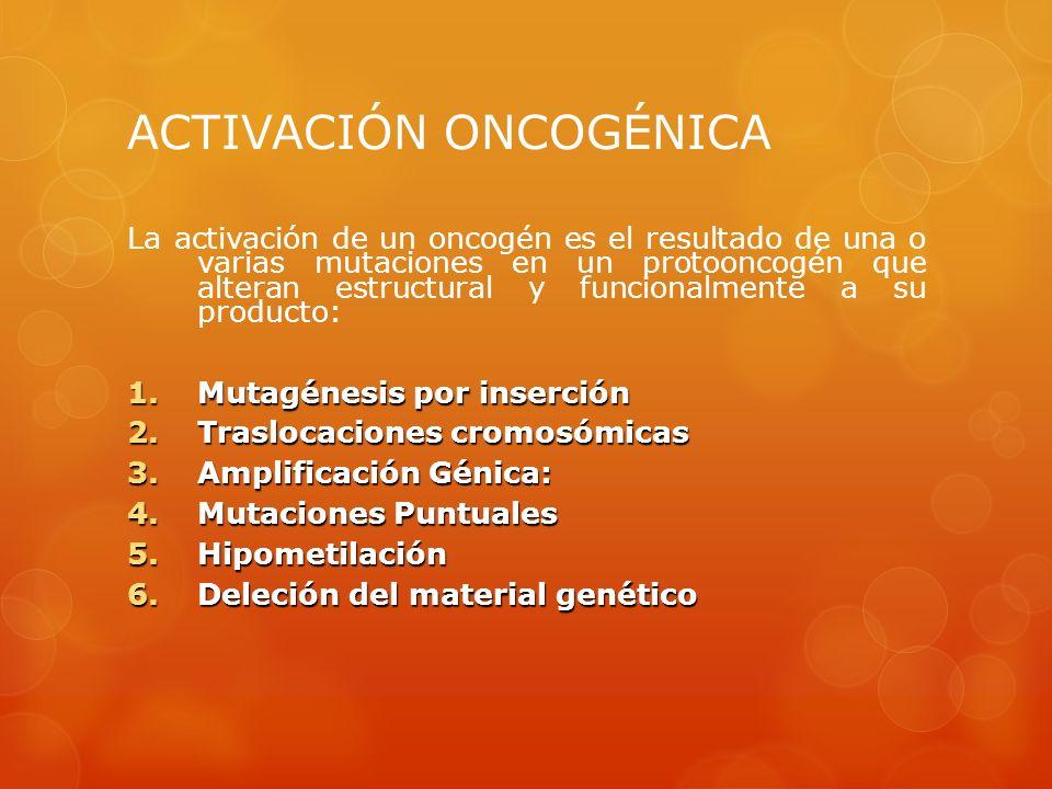 ACTIVACIÓN ONCOGÉNICA La activación de un oncogén es el resultado de una o varias mutaciones en un protooncogén que alteran estructural y funcionalmen