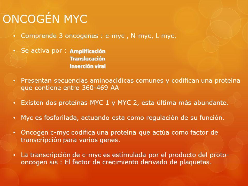 ONCOGÉN MYC Comprende 3 oncogenes : c-myc, N-myc, L-myc. Se activa por : Presentan secuencias aminoacídicas comunes y codifican una proteína que conti