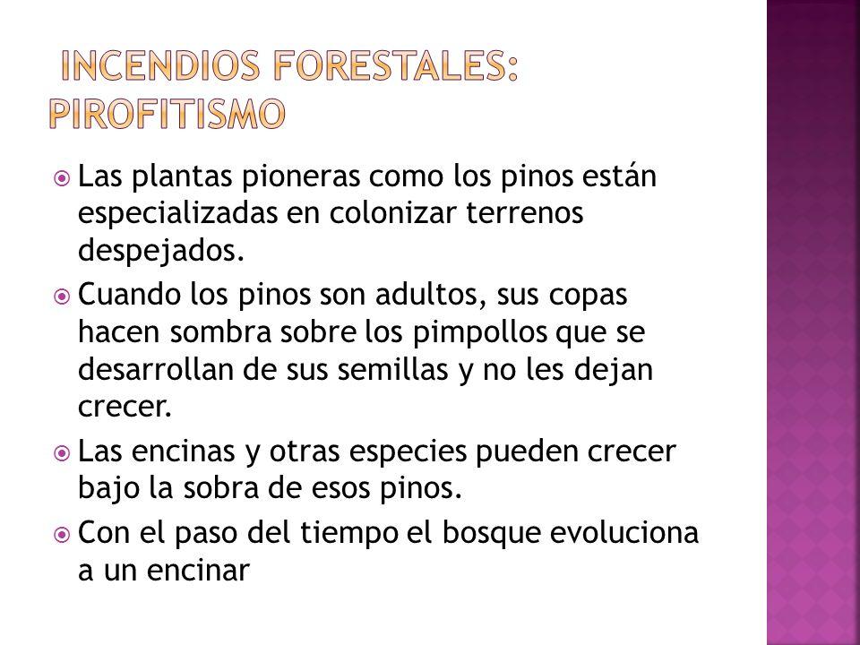 2) INCENDIOS FORESTALES Es una de las principales causas de la desaparición de los bosques. En los algunos ecosistemas, como los de clima mediterráneo