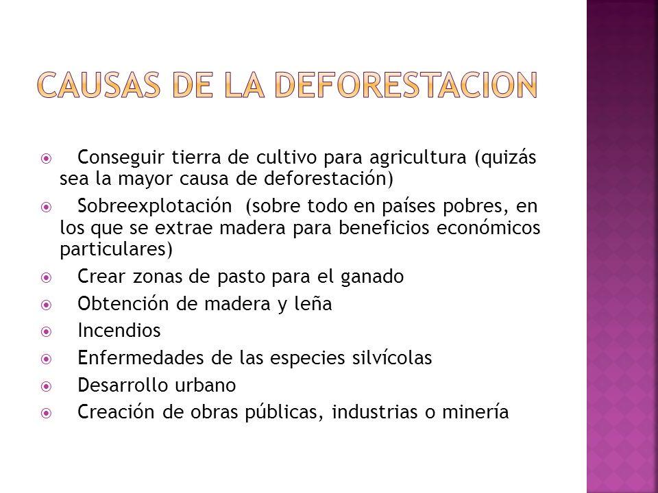 1)DEFORESTACION El 80 % de los bosques que había en la Tierra en el pasado se han degradado. Los principales bosques del mundo se encuentran en la Cue