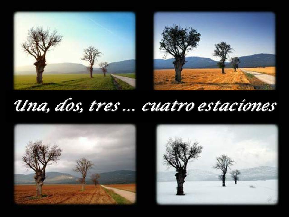 Una, dos, tres … cuatro estaciones