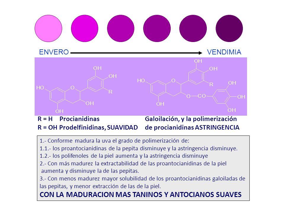 ENVERO VENDIMIA 1.- Conforme madura la uva el grado de polimerización de: 1.1.- los proantocianidinas de la pepita disminuye y la astringencia disminu