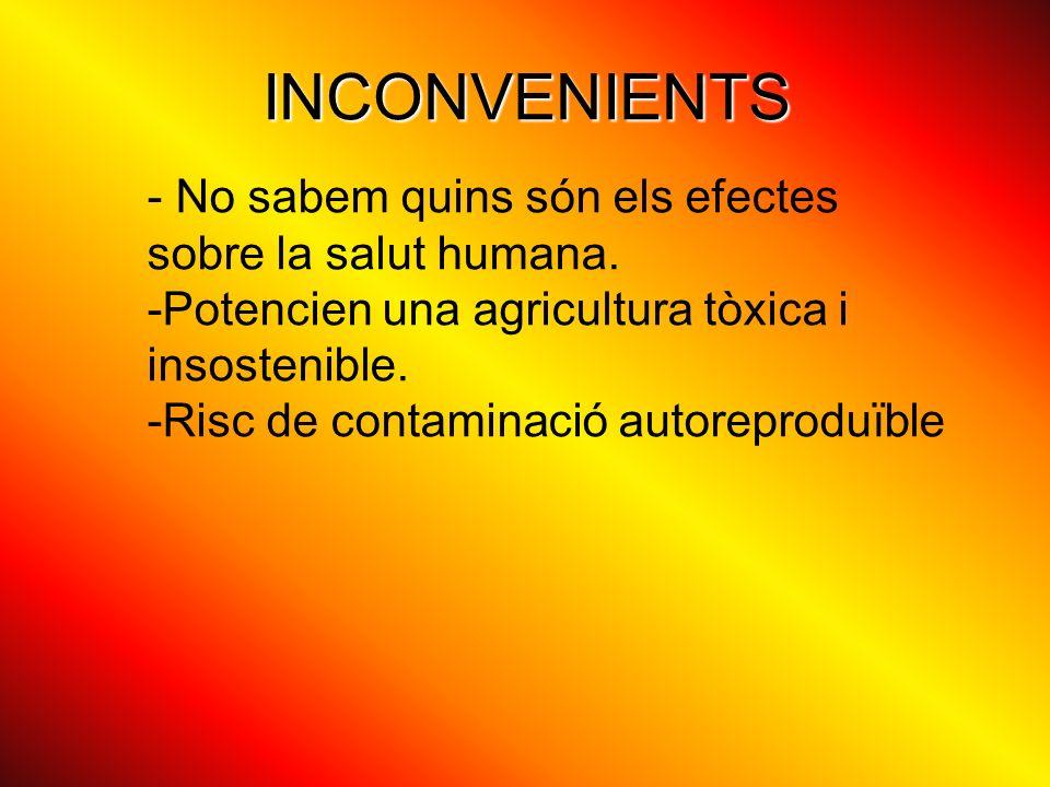INCONVENIENTS - No sabem quins són els efectes sobre la salut humana. -Potencien una agricultura tòxica i insostenible. -Risc de contaminació autorepr