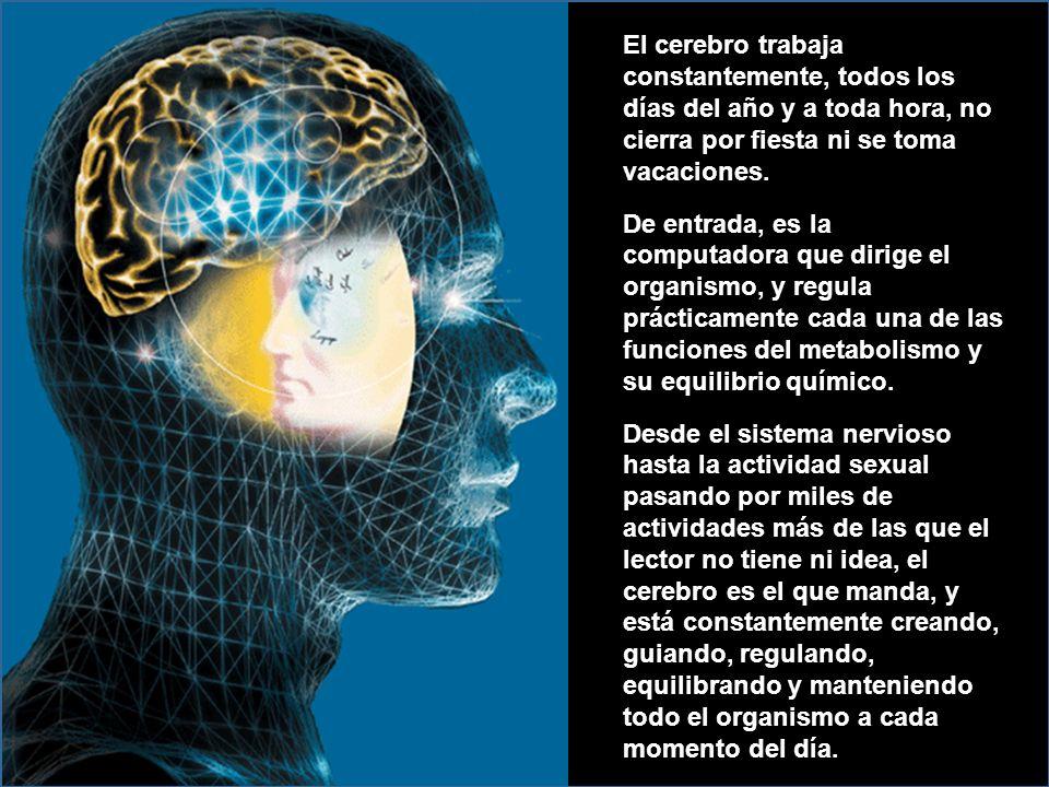 El cerebro trabaja constantemente, todos los días del año y a toda hora, no cierra por fiesta ni se toma vacaciones.