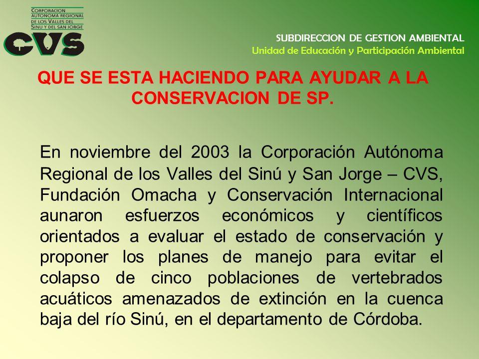 QUE SE ESTA HACIENDO PARA AYUDAR A LA CONSERVACION DE SP. En noviembre del 2003 la Corporación Autónoma Regional de los Valles del Sinú y San Jorge –