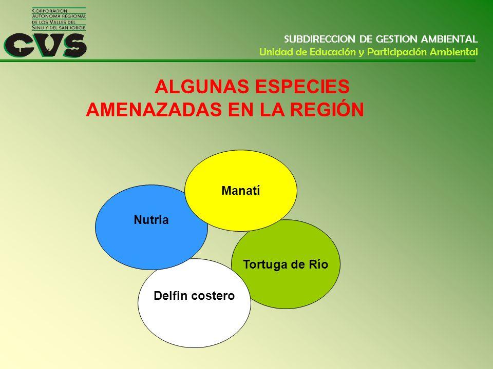 SUBDIRECCION DE GESTION AMBIENTAL Unidad de Educación y Participación Ambiental ALGUNAS ESPECIES AMENAZADAS EN LA REGIÓN Tortuga de Río Delfin costero