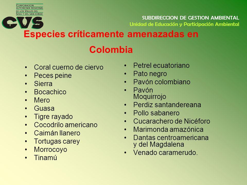 Especies críticamente amenazadas en Colombia Coral cuerno de ciervo Peces peine Sierra Bocachico Mero Guasa Tigre rayado Cocodrilo americano Caimán ll