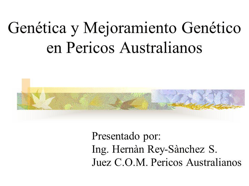 Presentado por: Ing. Hernàn Rey-Sànchez S. Juez C.O.M. Pericos Australianos Genética y Mejoramiento Genético en Pericos Australianos