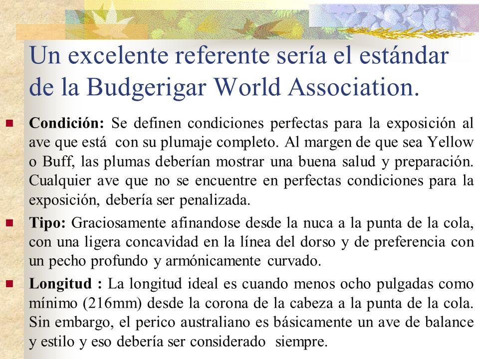 Un excelente referente sería el estándar de la Budgerigar World Association. Condición: Se definen condiciones perfectas para la exposición al ave que