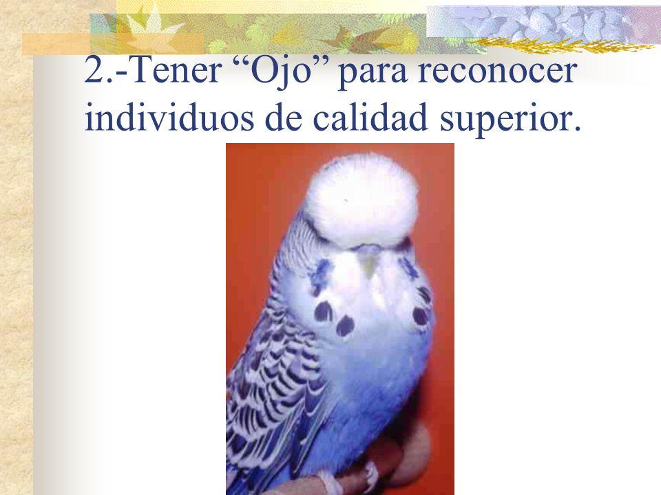 2.-Tener Ojo para reconocer individuos de calidad superior.