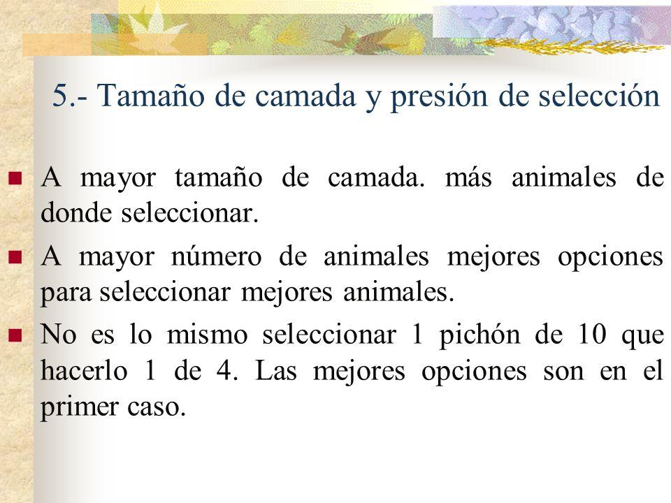 5.- Tamaño de camada y presión de selección A mayor tamaño de camada. más animales de donde seleccionar. A mayor número de animales mejores opciones p