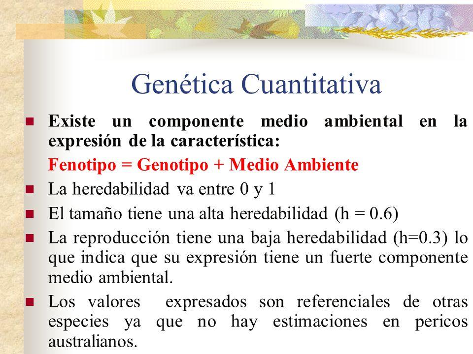 Genética Cuantitativa Existe un componente medio ambiental en la expresión de la característica: Fenotipo = Genotipo + Medio Ambiente La heredabilidad