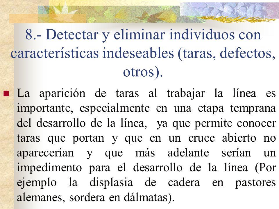 8.- Detectar y eliminar individuos con características indeseables (taras, defectos, otros). La aparición de taras al trabajar la línea es importante,