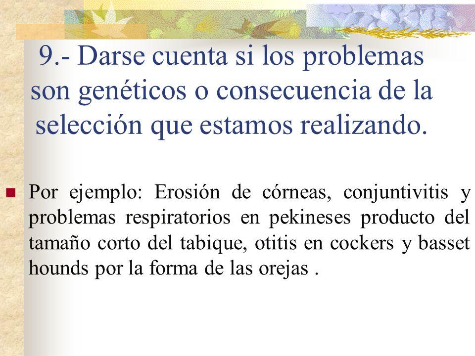 9.- Darse cuenta si los problemas son genéticos o consecuencia de la selección que estamos realizando. Por ejemplo: Erosión de córneas, conjuntivitis
