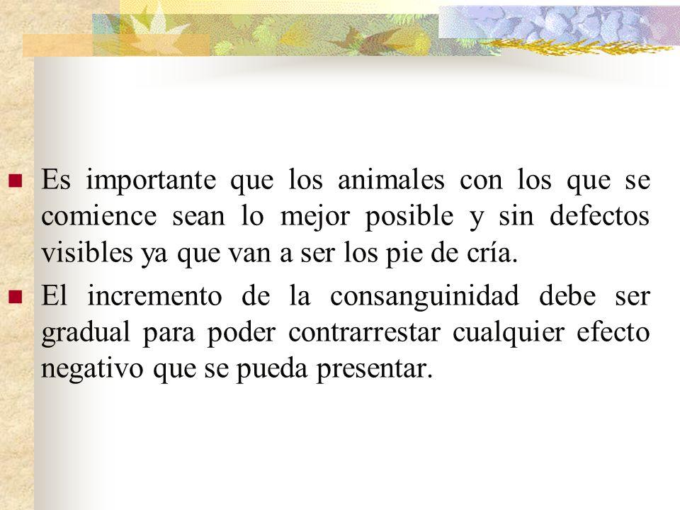 Es importante que los animales con los que se comience sean lo mejor posible y sin defectos visibles ya que van a ser los pie de cría. El incremento d