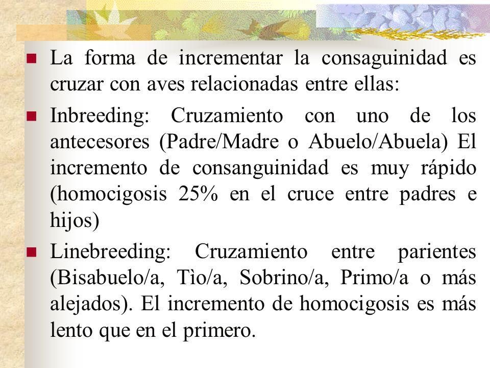 La forma de incrementar la consaguinidad es cruzar con aves relacionadas entre ellas: Inbreeding: Cruzamiento con uno de los antecesores (Padre/Madre