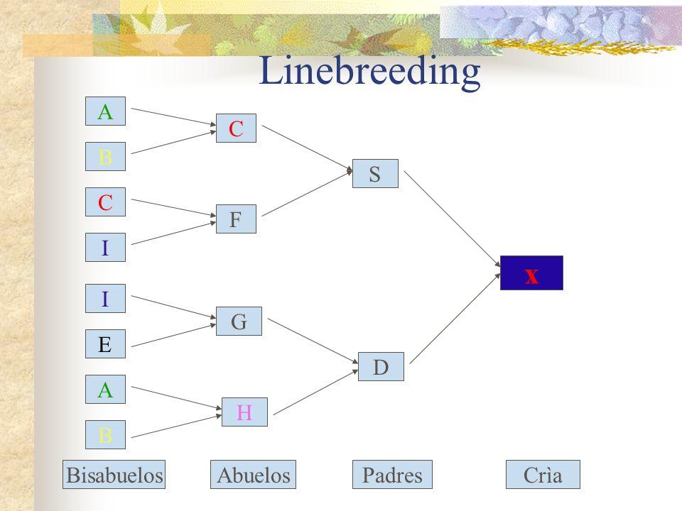 Linebreeding C I I E A B B A C F G H S D x BisabuelosAbuelosPadresCrìa
