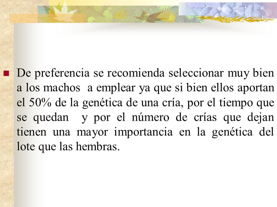 De preferencia se recomienda seleccionar muy bien a los machos a emplear ya que si bien ellos aportan el 50% de la genética de una cría, por el tiempo
