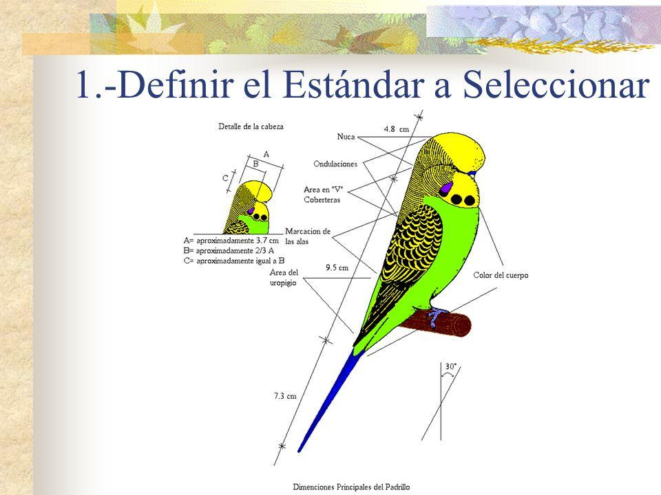 1.-Definir el Estándar a Seleccionar