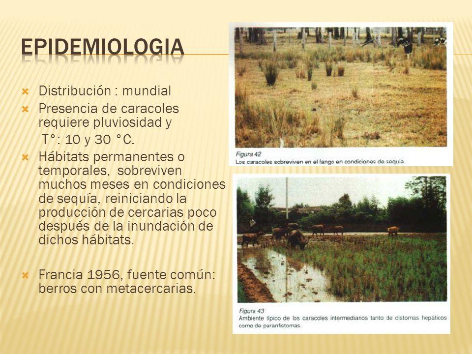Un total de 1701 personas infectadas fueron reportadas durante el periodo de 1963 a 2005.