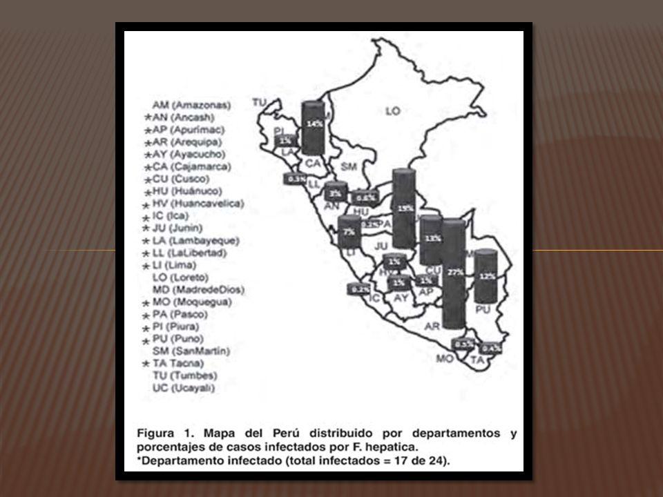 PRESENCIA DE NODULOS SUBCUTANEOS: ERRATICA; PRUEBAS SEROLOGICAS, NO APARECEN HUEVOS EN HECES