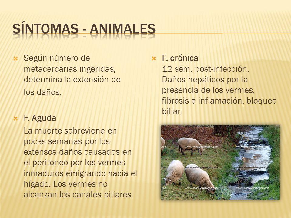 No exponer a niños entre 2 y 8 años Restringir áreas de pastoreo a través de cercos en zonas infectadas.