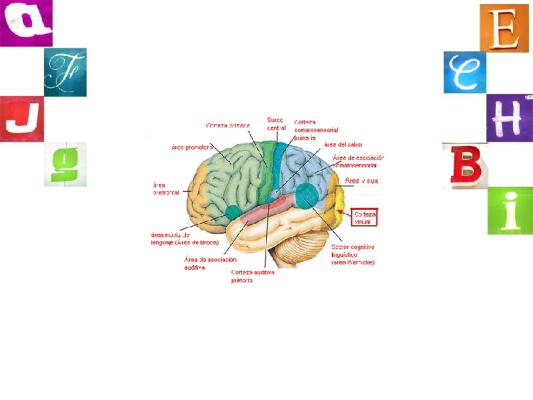 déficits compartidosintervención compartida Atención selectiva Impulsividad Habilidades grafomotrices Memoria de trabajo Autoestima Intervención educativa Intervención familiar Tratamiento farmacológico