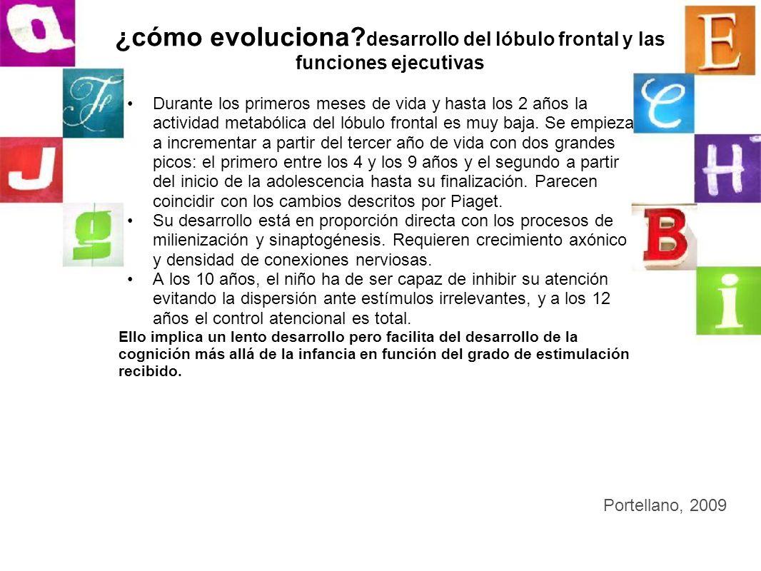 ¿cómo evoluciona? desarrollo del lóbulo frontal y las funciones ejecutivas Durante los primeros meses de vida y hasta los 2 años la actividad metabóli