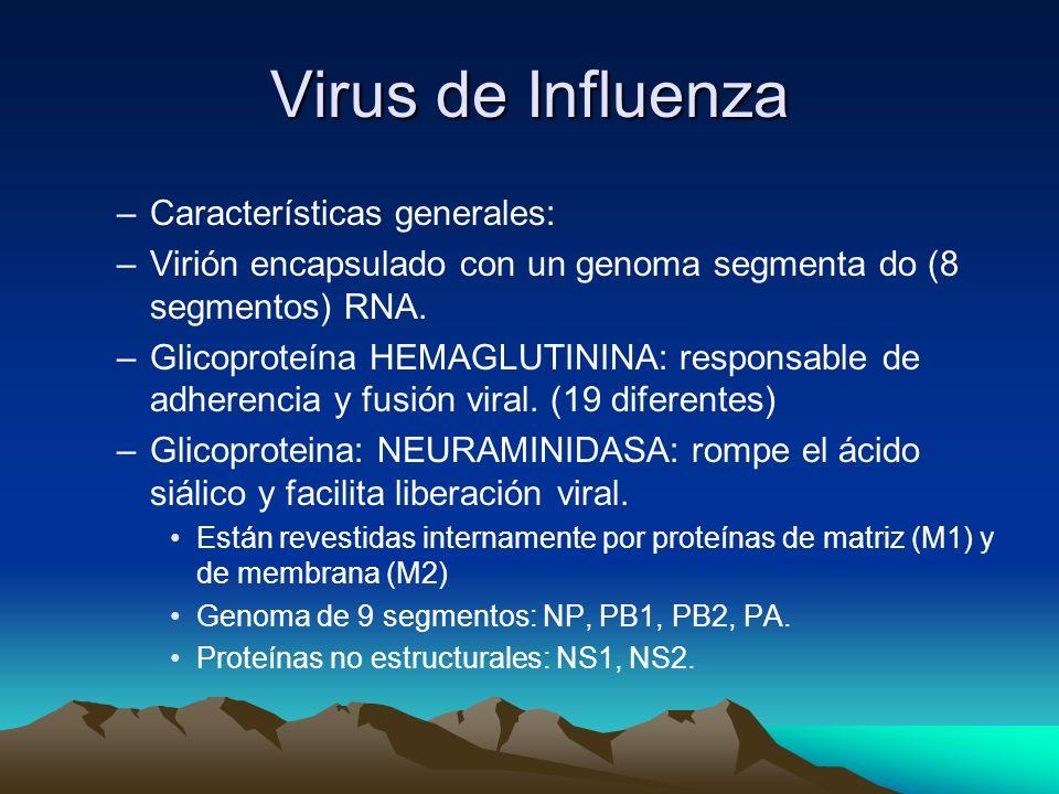 Influenza Tres tipos de Virus de influenza: –A: Causa mas común en adultos y casos graves en pacientes debilitados. –B: Enfermedad mas leve y mas frec