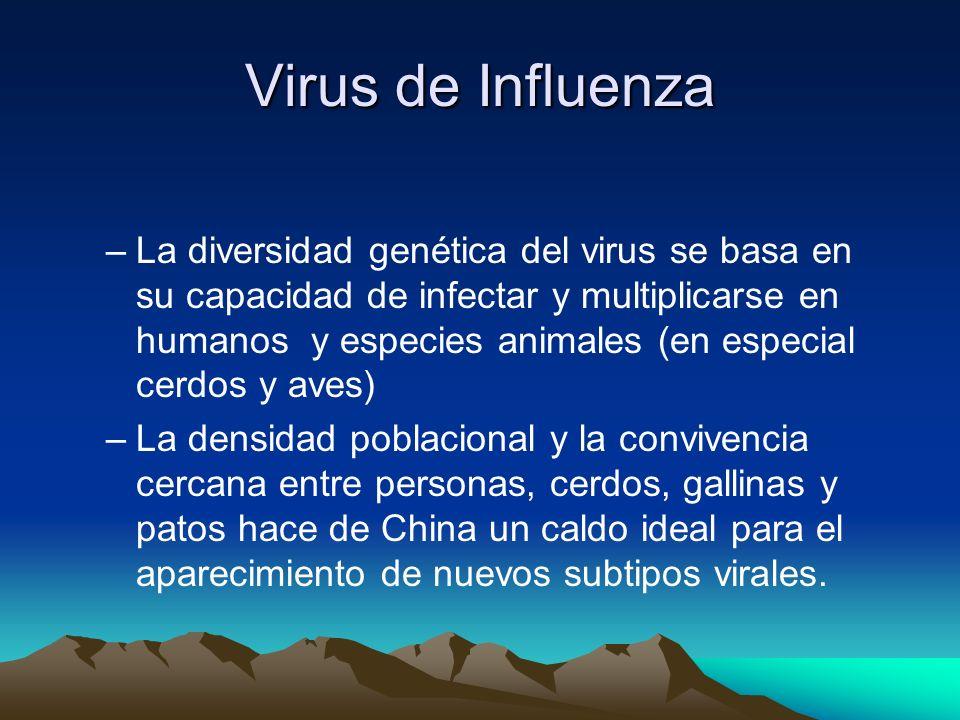 Virus de Influenza –Características generales: –Virión encapsulado con un genoma segmenta do (8 segmentos) RNA. –Glicoproteína HEMAGLUTININA: responsa