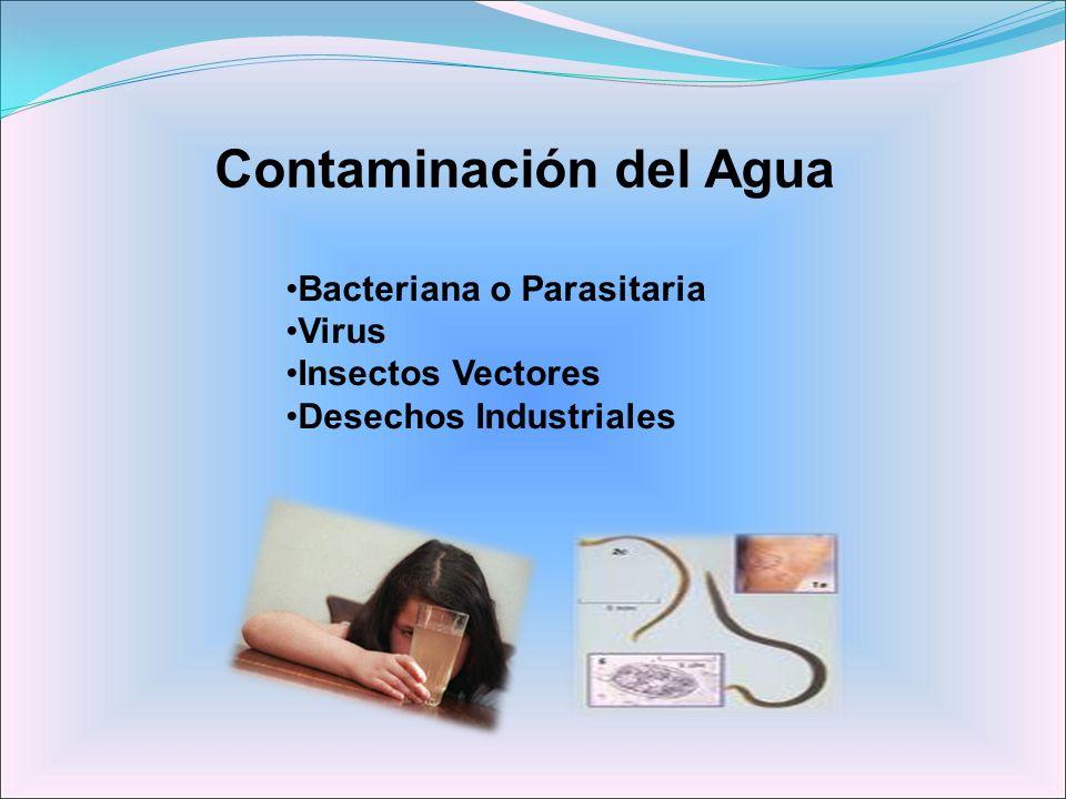 Contaminación del Agua Bacteriana o Parasitaria Virus Insectos Vectores Desechos Industriales