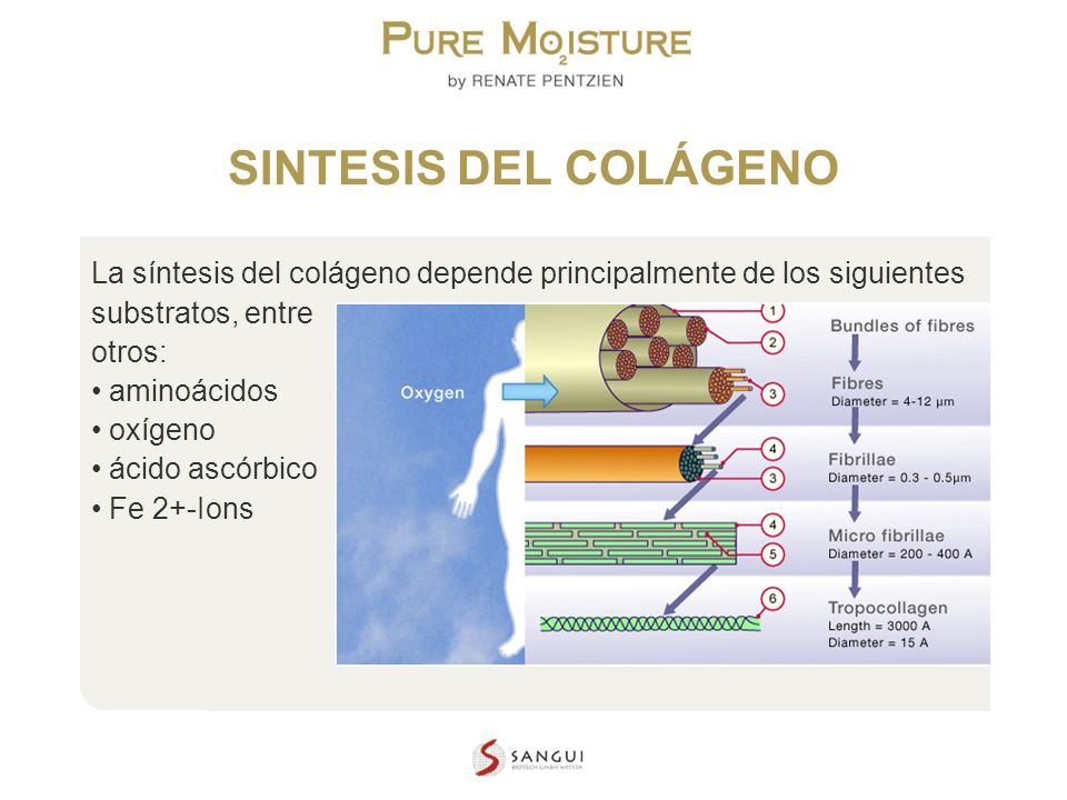 NANO TECHNOLOGY COSMETICS SINTESIS DEL COLÁGENO La síntesis del colágeno depende principalmente de los siguientes substratos, entre otros: aminoácidos