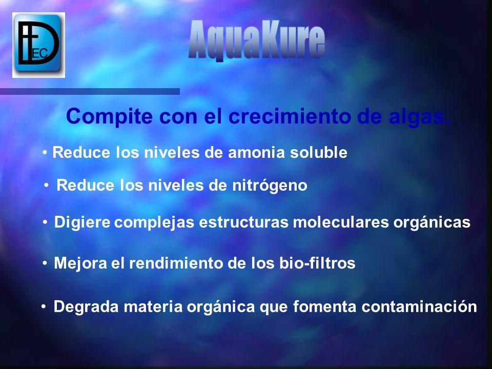 Degrada materia orgánica que fomenta contaminación Compite con el crecimiento de algas. Reduce los niveles de amonia soluble Reduce los niveles de nit