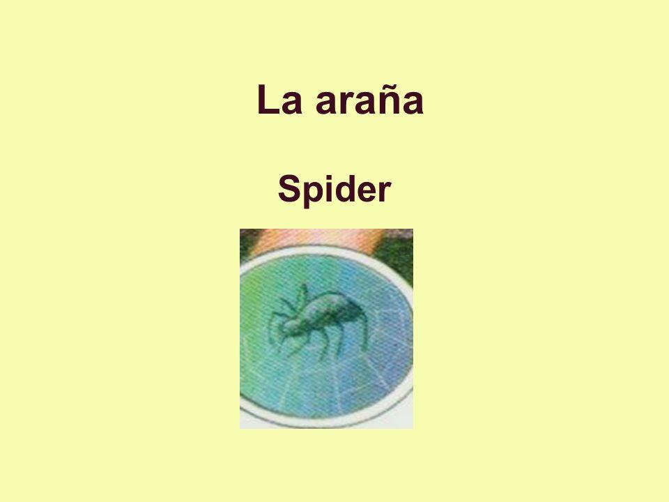 La araña Spider