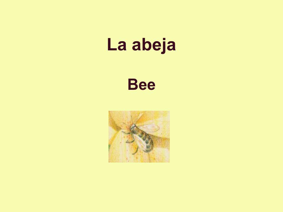 La abeja Bee