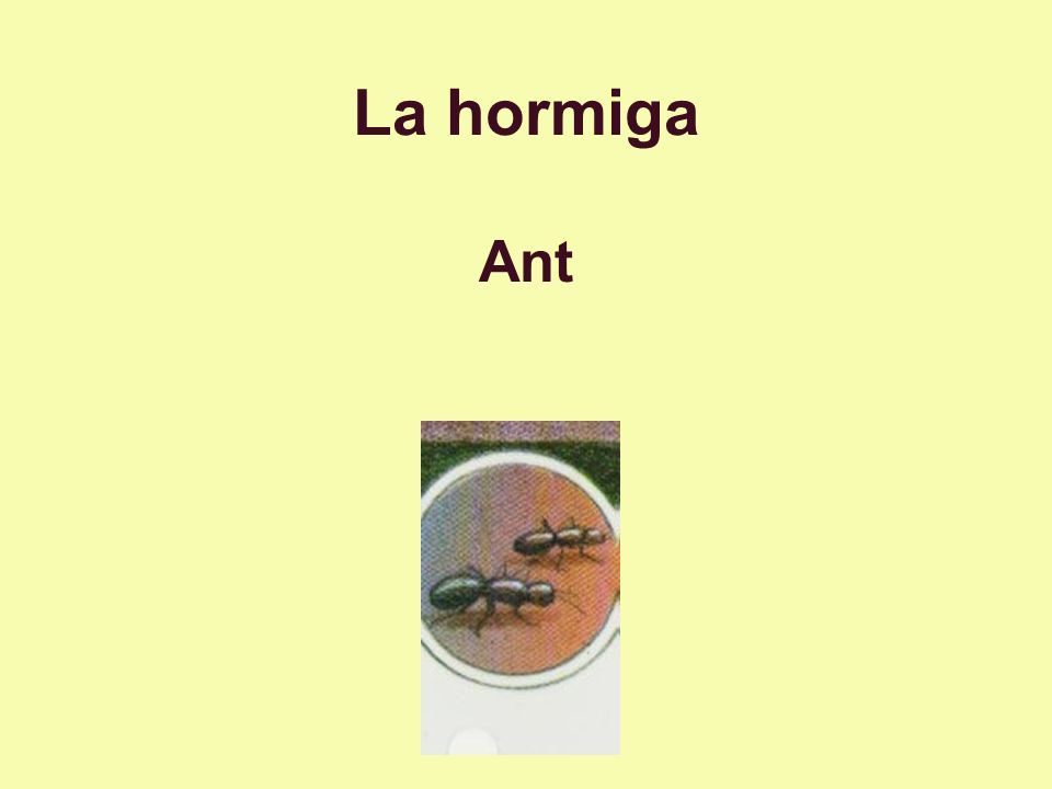 La hormiga Ant