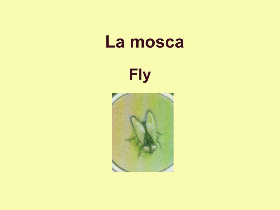 La mosca Fly